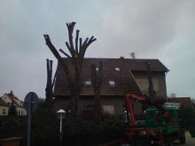 Baumarbeiten und Baumpflege